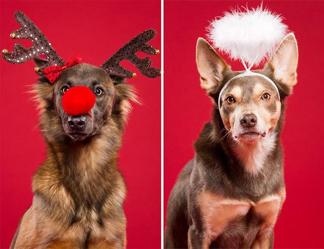 новогодний костюм для собак