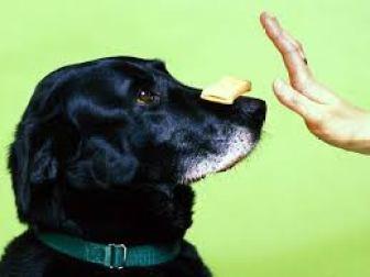можно ли собаке давать сыр