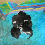 katten - 2011-02-25%2B22-47-52%2B-%2BIMG_0244.JPG