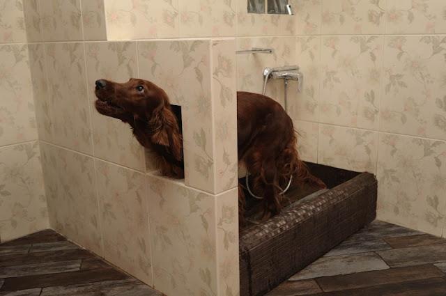 мыть лапы собаке