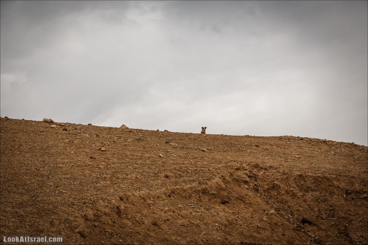 Неизведанные тропы Иудейской пустыни | LookAtIsrael.com - Фото путешествия по Израилю