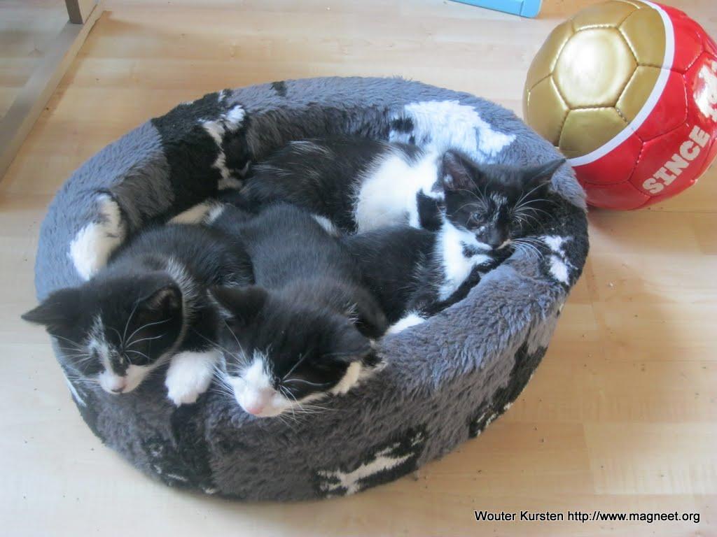 katten - 2011-04-12%2B17-22-33%2B-%2BIMG_0396.JPG