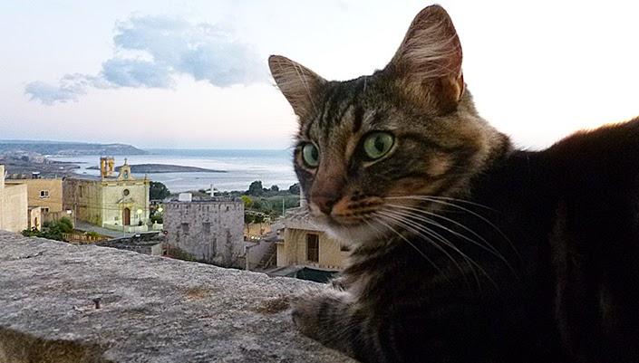 Malta, Gozo, Victoria, weekly pictures, healthy breakfast idea