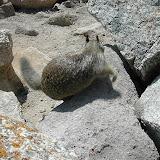 Montery Bay Aquarium, USA - 207779785_b7727b3173.jpg