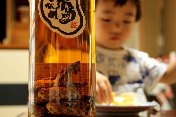 Habushu (ハブ酒) - 7 Bebidas Tradicionais Japonesas Para Você Experimentar