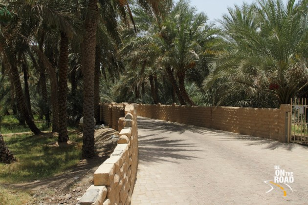 The Al Ain oasis that is full of date palms