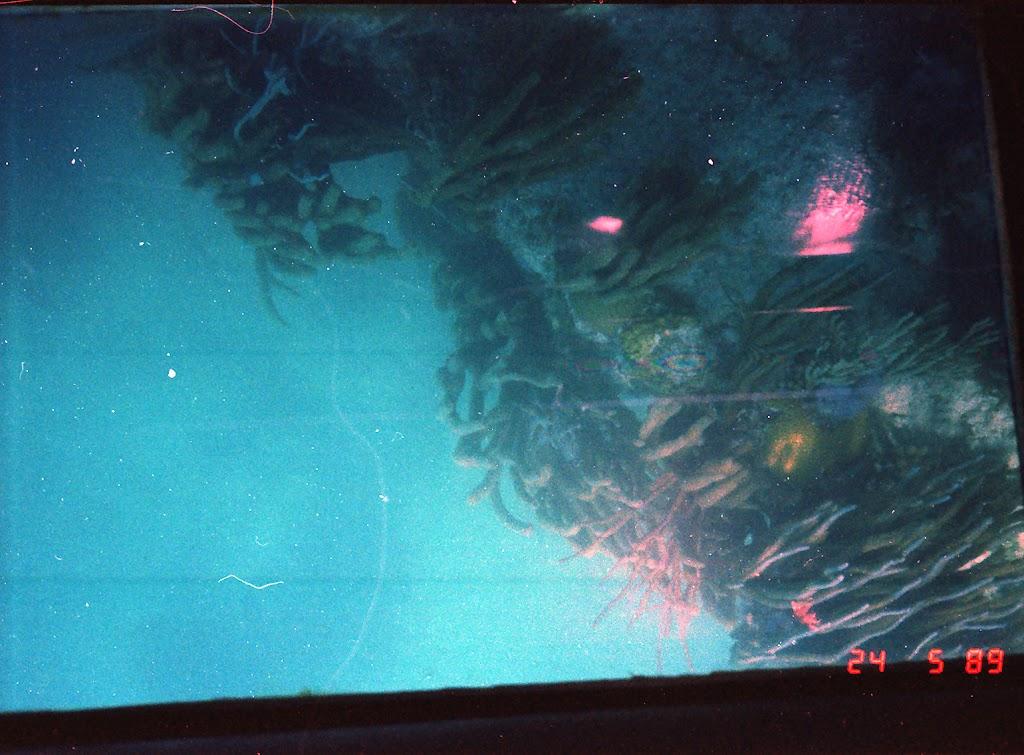1080Under-Water Sightseeing
