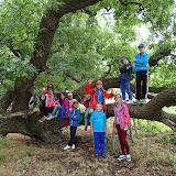 Un stejar secular din Padurea Letea