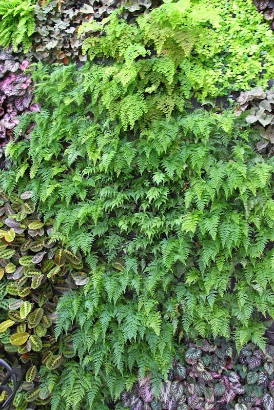 Muros verdes de interior
