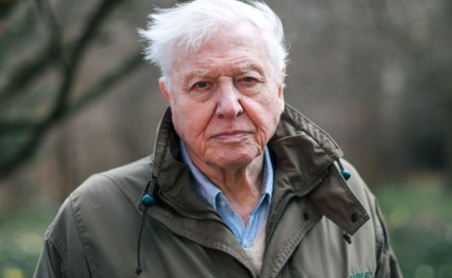 Sir David Attenborough Narrative Has Watchers In Tears Over Orangutan S Predicament