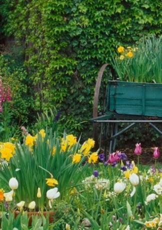 Top 20 Hình Ảnh Đẹp Vườn Hoa