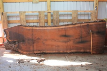 Walnut 319-6  Length 12', Max Width (inches) 47 Min Width (inches) 38 Thickness 12/4  Notes :Kiln Dried