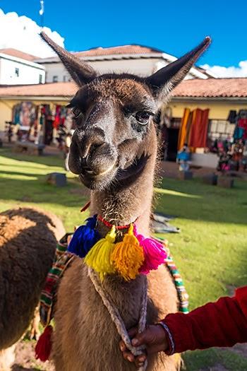 Cusco84.jpg