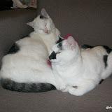 katten - 2012-10-05%2B21-42-56%2B-%2BIMG_0971.JPG