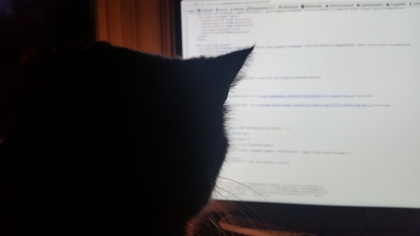 Coding kitty