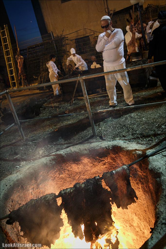 Песах у самаритян: жертвоприношение | LookAtIsrael.com - Фотографии Израиля и не только...