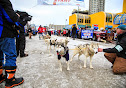Iditarod2015_0137.JPG