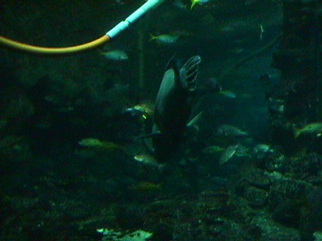 1040Aquarium Fish Schooling