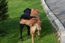 Зачем собаке хвост