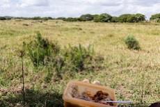 lunch next to zebras