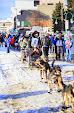 Iditarod2015_0317.JPG
