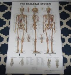 large anatomical chart company the skeletal system poster shophousingworks [ 1280 x 1280 Pixel ]