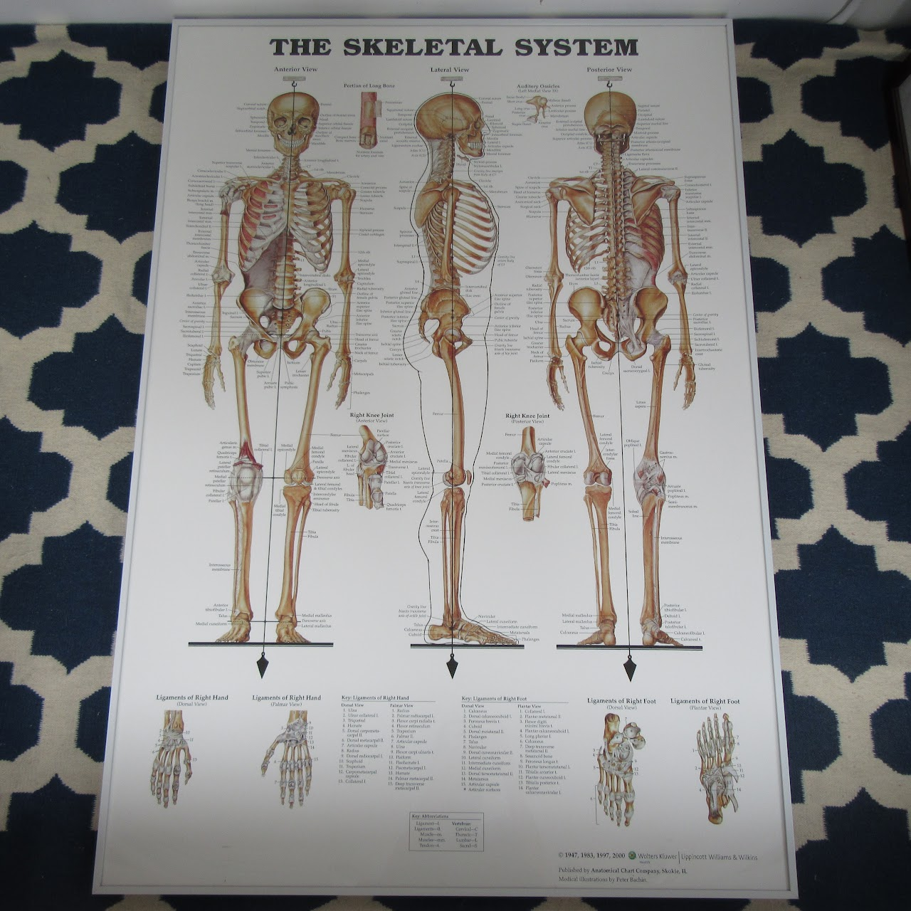hight resolution of large anatomical chart company the skeletal system poster shophousingworks