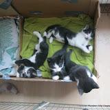 katten - 2011-04-03%2B10-29-27%2B-%2BIMG_0346.JPG