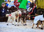 Iditarod2015_0369.JPG