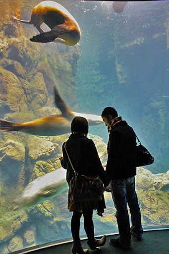 seal tank, osaka aquarium, top places to visit in Japan Osaka, top aquariums, best aquariums