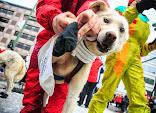 Iditarod2015_0121.JPG