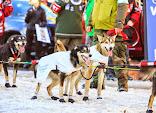Iditarod2015_0378.JPG