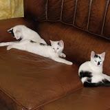 katten - 2010-07-09%2B23-14-54%2B-%2BDSCF1370.JPG