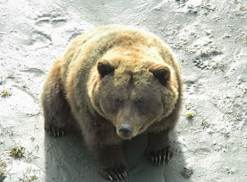 Bear Enclosure WCC - Patron  4.JPG
