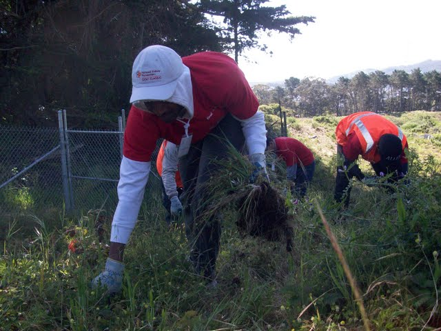 IVLP 2010 - Volunteer Work at Presidio Trust - 100_1408.JPG