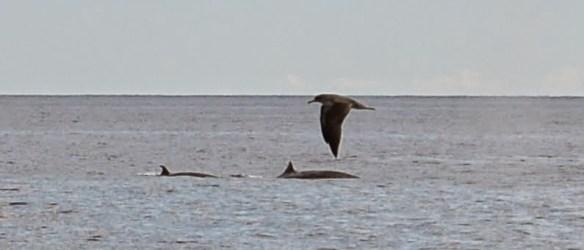 2 walvissen!