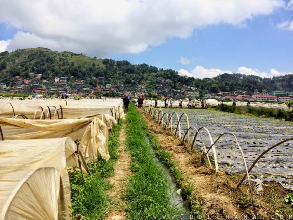 what to do in Baguio city activities destinations strawberry farm la trinidad benguet