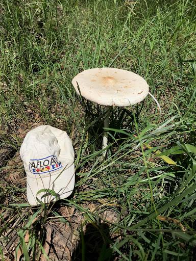 20180317-mushroom-2018-03-18-14-02.jpg