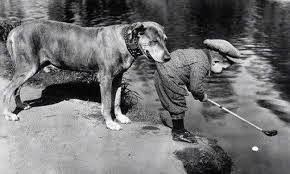 верность собаки