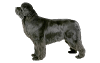 Newfoundland Beds, Collars and Accessories