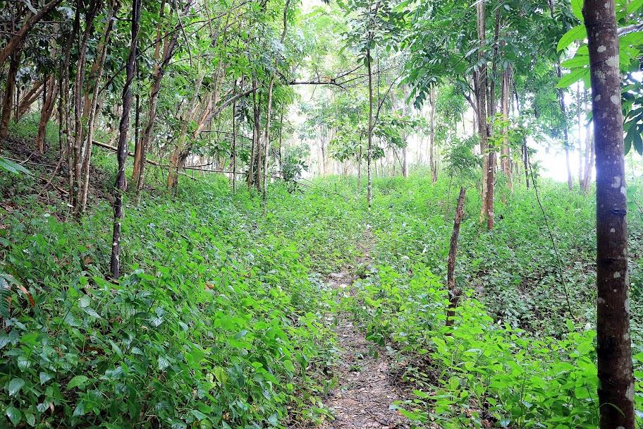 Sebagian pohon yang mulai di tanamn tahun 2000