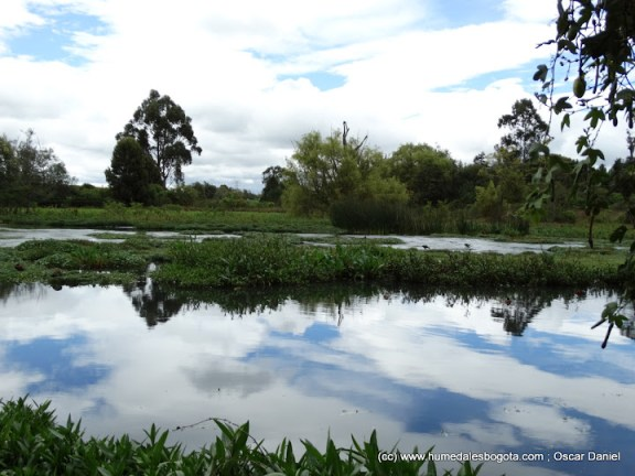 Humedal La Conejera