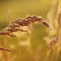 Summer Gold_Andy Dell.jpg