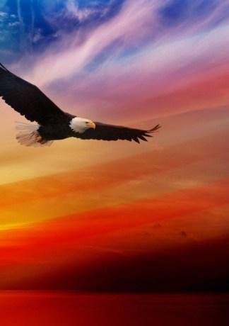 20 hình ảnh chim đại bàng dũng mãnh tuyệt đẹp