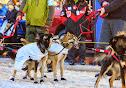 Iditarod2015_0368.JPG