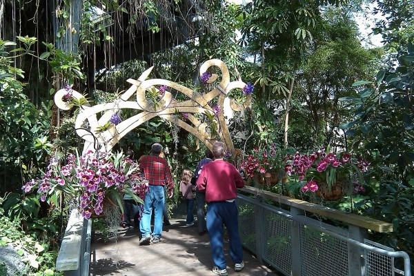Love Orchid Mania Cleveland Botanical Gardens