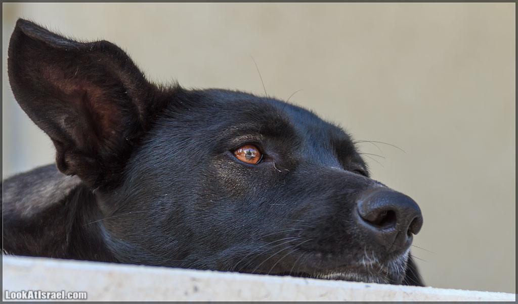Собаки Тель-Авива | Tel-Aviv dogs | LookAtIsrael.com - Фото путешествия по Израилю