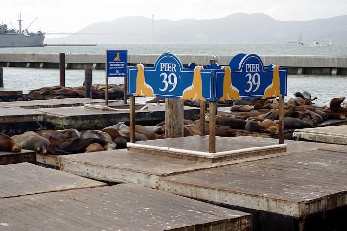 Muelle 39, San Francisco