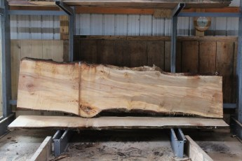 "564  Hard Maple Curly Burly -10 10/4 x  35"" x  24"" Wide x  11'  Long"