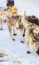 Iditarod2015_0164.JPG